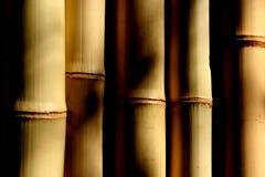 Bambú y sombras Imágenes de archivo libres de regalías