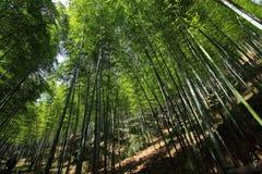 Bambúes Imagen de archivo libre de regalías