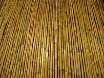 bambúes Foto de archivo