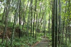 Bambúes en el mt Emei de China imágenes de archivo libres de regalías