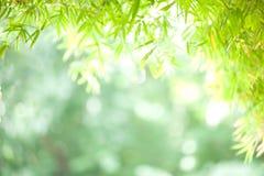 Bambù: bokeh del fondo Immagine Stock