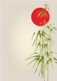 Bambú de Japón Fotografía de archivo