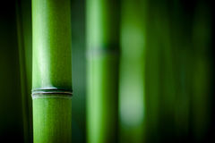 Bambú del zen Imágenes de archivo libres de regalías