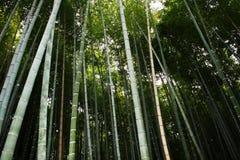 Bambù forest Stock Photos