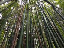 Bamb? imagen de archivo