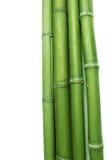 Bambú verde Imagenes de archivo