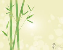 Bambù verde Immagine Stock Libera da Diritti