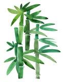 Bambù verde su un bianco Immagini Stock