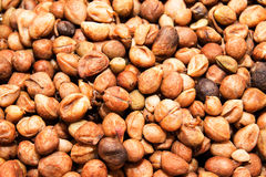 Bambarra Groundnut Royalty Free Stock Photography