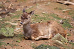 Bambi. Little deer in the wild nature Stock Photo