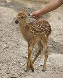 BAMBI on a farm Stock Images