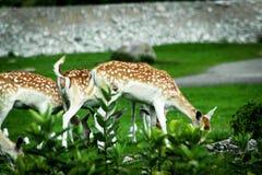 3 bambies есть еду от повышенной корзины стоковые фото