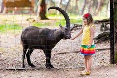 Bambina che alimenta capra selvaggia allo zoo Immagini Stock