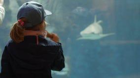 Bambina che esamina il carro armato di pesce l'acquario e che mangia il gelato UltraHD stock footage