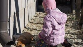 Bambina che gioca con un film del gatto stock footage