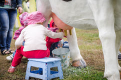 Bambina che impara mungere una mucca Immagine Stock