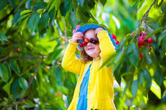 Bambina che seleziona ciliegia fresca su un'azienda agricola Fotografie Stock Libere da Diritti