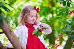 Bambina che seleziona la bacca fresca della ciliegia nel giardino Immagine Stock Libera da Diritti