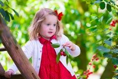 Bambina che seleziona la bacca fresca della ciliegia nel giardino Immagine Stock