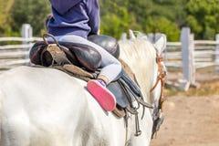 Bambina che si siede in una sella su un cavallo posteriore e che si diverte guida lungo il recinto di legno all'azienda agricola  Immagini Stock Libere da Diritti