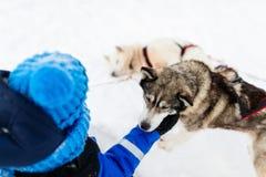 Bambina con il cane del husky Fotografia Stock Libera da Diritti