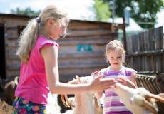 Bambina con la capra Immagine Stock Libera da Diritti