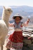 Bambina con un'alpaga nel Perù Immagine Stock