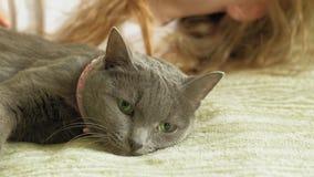 Bambina con un gatto grigio stock footage