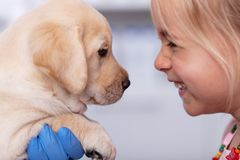 Bambina con un sorriso che incontra il suo nuovo cucciolo al riparo animale immagine stock libera da diritti