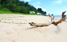 Bambina della spiaggia Immagini Stock