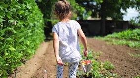Bambina felice che corre con il canestro della fragola in giardino Frutta e verdure nazionali nella campagna archivi video