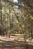 Bambina, grande foresta Fotografie Stock Libere da Diritti