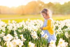 Bambina nel campo del narciso Immagine Stock
