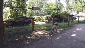 Bambina nel parco di avventura nel giorno di estate Parco della corda Giri nella natura Felicità e concetto felice di infanzia video d archivio