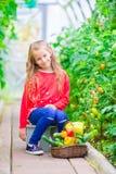 Bambina in serra con il canestro pieno di tempo di raccolto di raccogliere grande canestro in pieno delle verdure Fotografie Stock