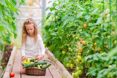 Bambina in serra con il canestro pieno di tempo di raccolto di raccogliere grande canestro in pieno delle verdure Immagini Stock Libere da Diritti