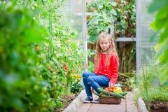 Bambina in serra con il canestro pieno di tempo di raccolto di raccogliere grande canestro in pieno delle verdure Fotografia Stock