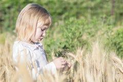 Bambina sola che lacera le spighette del grano nel campo di estate Fotografie Stock Libere da Diritti