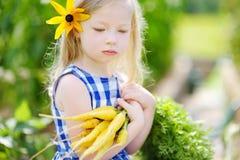 Bambina sveglia che tiene un mazzo di carote gialle fresche Fotografia Stock Libera da Diritti