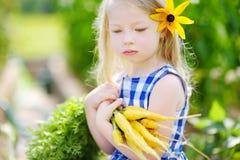 Bambina sveglia che tiene un mazzo di carote gialle fresche Fotografie Stock Libere da Diritti