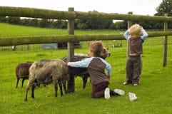 bambini che alimentano le capre Immagini Stock Libere da Diritti
