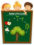 Bambini che esaminano il ciclo di vita della mela illustrazione vettoriale