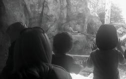 Bambini che esaminano leopardo in zoo Fotografia Stock