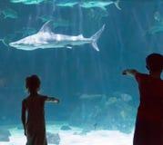Bambini che guardano gli squali fotografia stock