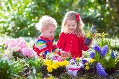 Bambini che piantano i fiori in giardino di fioritura Fotografia Stock Libera da Diritti