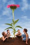 Bambini che piantano un Coneflower gigante Immagine Stock