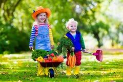 Bambini che selezionano le verdure sull'azienda agricola organica Fotografie Stock Libere da Diritti