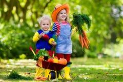 Bambini che selezionano le verdure sull'azienda agricola organica Fotografia Stock
