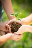 Bambini che tengono plantula in mani Fotografia Stock Libera da Diritti