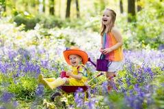Bambini con i fiori di campanula, strumenti di giardino Fotografia Stock Libera da Diritti